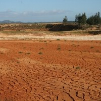 Why Being Vegan Can Save the Drought Crisis