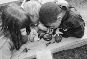 Outdoor classroom pix6