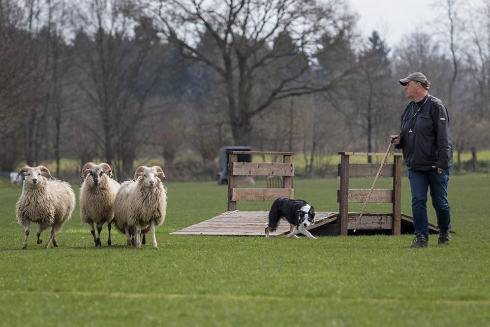 schapendemo-klein