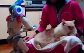 nao-robot-cat