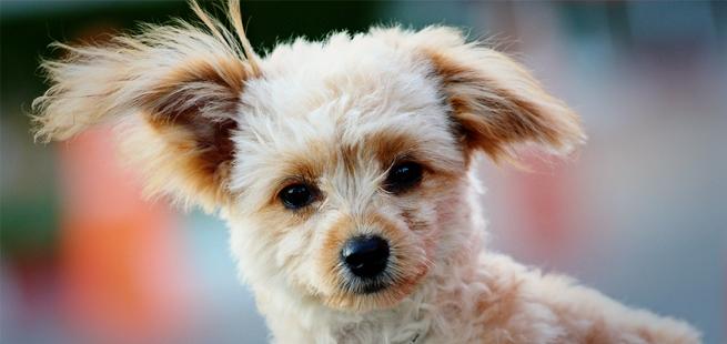 dog-vacay