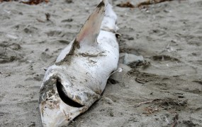 grooveshark-kicked-out-of-google-play