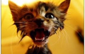 crazy-cat