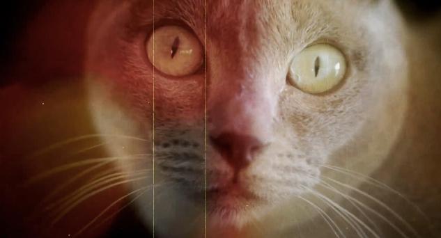 sundance catnip