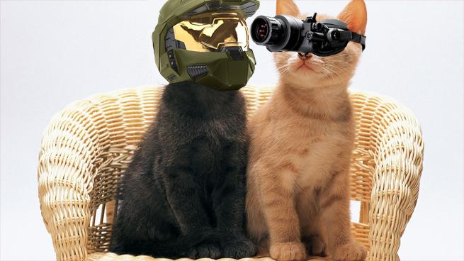 Special Edition Kitties