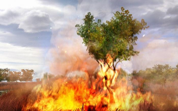 far-cry-2-grass-on-fire-screen-shot