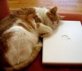 cat apppl