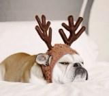 Grumpy Reindeer