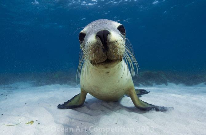 This sea lion thinks learning is cool.
