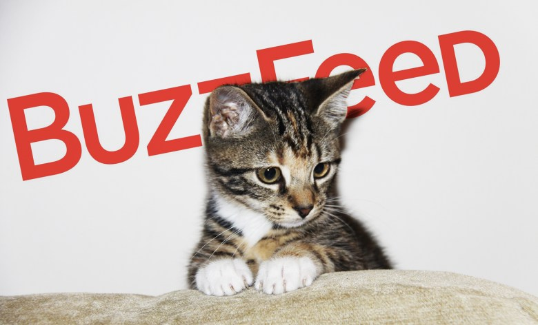 buzzfeed-cat
