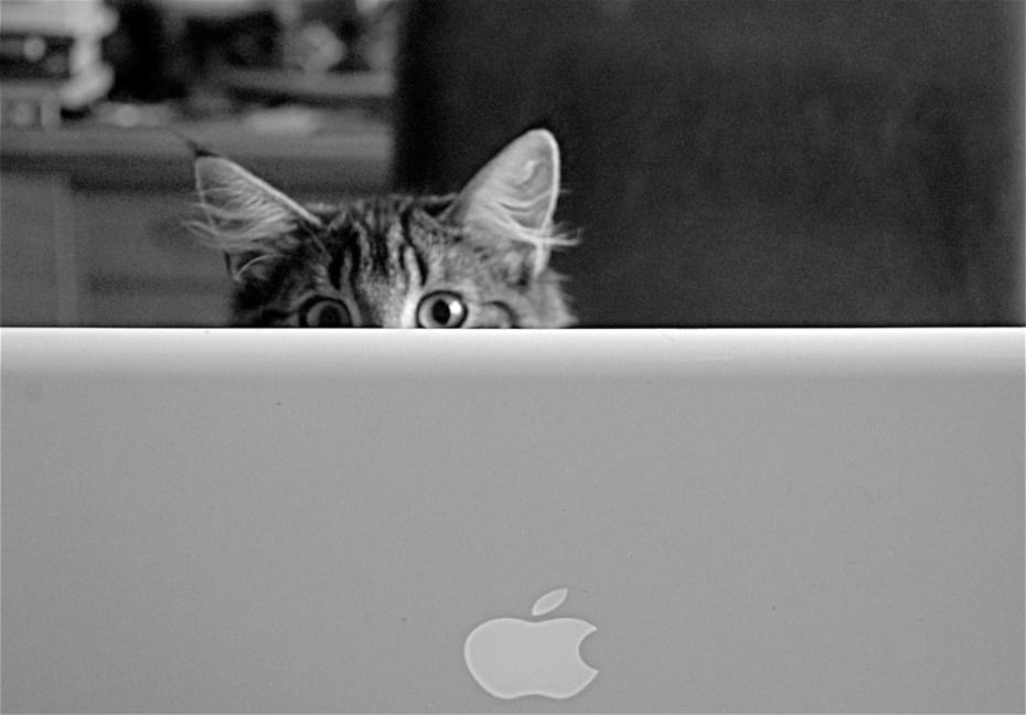 Trítla the cat cares deeply about her privacy.