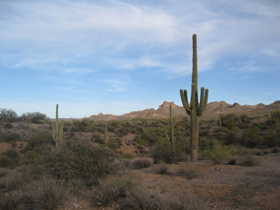 Desert Doug Kerr FLickr