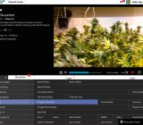 "A screenshot of Pluto TV's ""420"" channel."