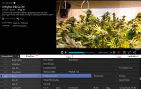 """A screenshot of Pluto TV's """"420"""" channel."""