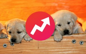 buzzfeed puppies