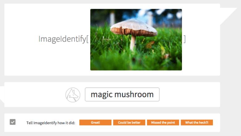 Is that a magic mushroom? ImageIdentify thinks it is.