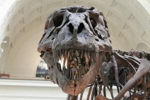 teach kids about dinosaurs