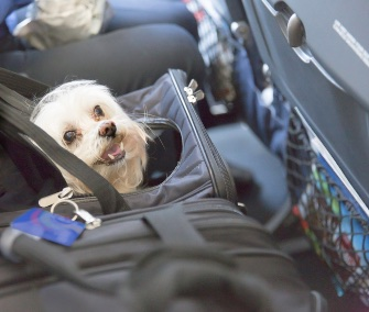 Sedating pets for air travel for Air travel with dog in cabin