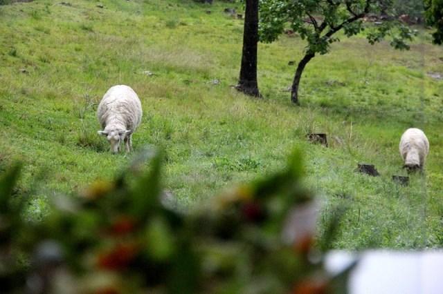 via-organica-em-garibaldi_-foto-alexandra-ungaratto_viajando-bem-e-barato