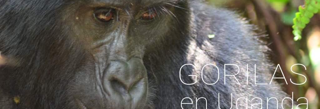 Increíble trekking para ver gorilas en Bwindi, Uganda