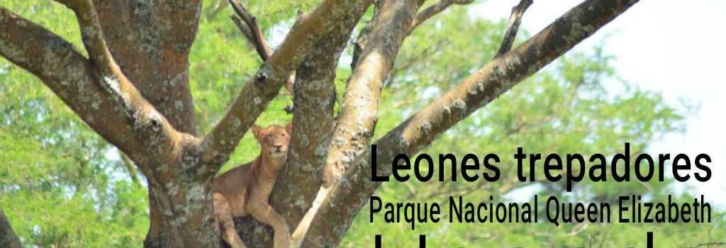Los leones trepadores del Parque Nacional Queen Elizabeth, Uganda