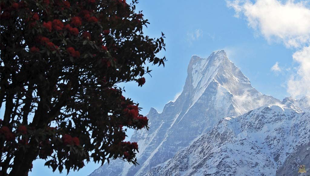 trekking al Campamento Base del Annapurna - machhapuchhare