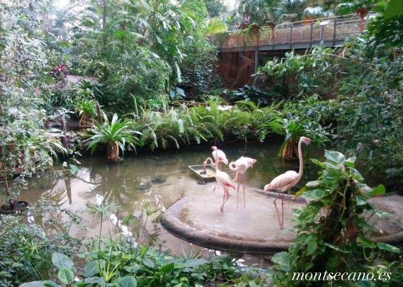 Tropical Island1