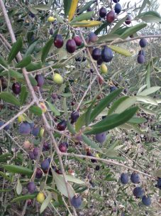 A selection of our olives