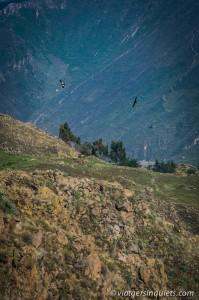 270216_Peru_493