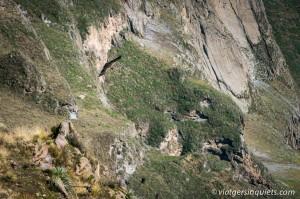270216_Peru_498