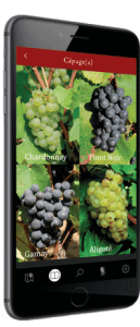 Pinot-Chardonnay-climavinea-129x300