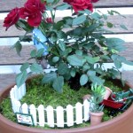 Miniature Mother's Day Rose Garden