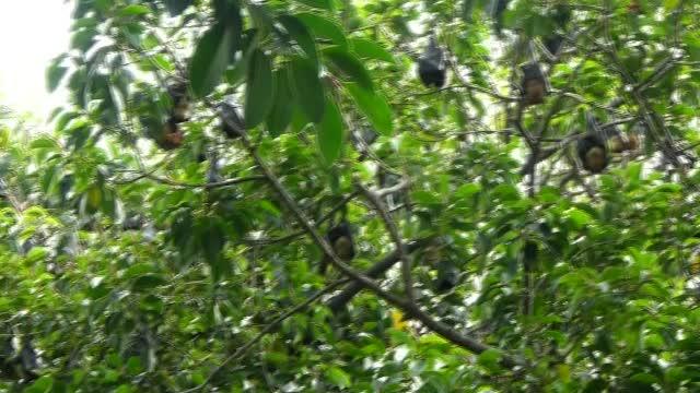 Rainforest Fruit Bats 1