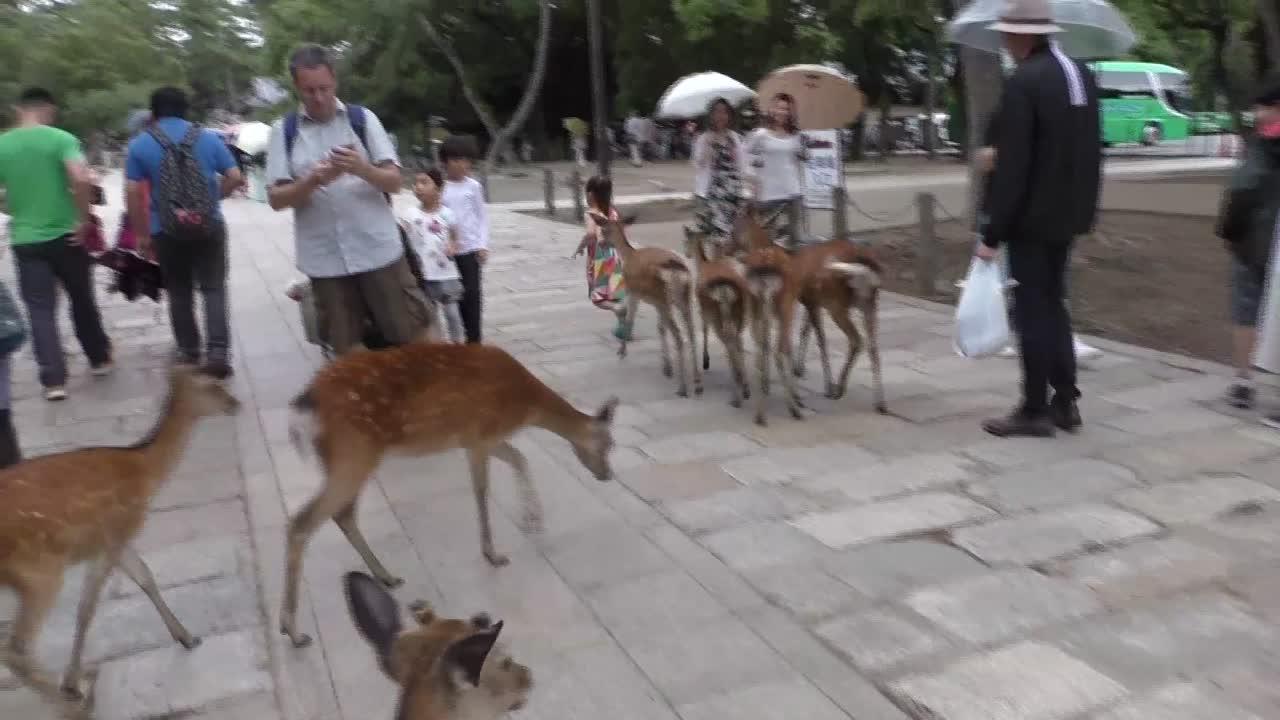 Cervos em Nara, Japão