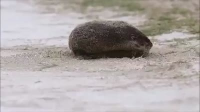 Wiggly River Otter Movie