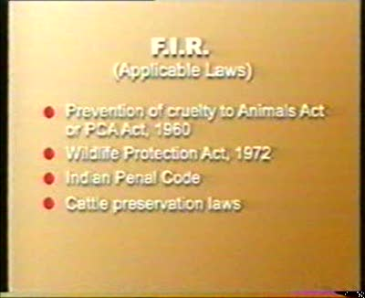 How to lodge an F.I.R (First Information Report) with the Police when you see animal cruelty?