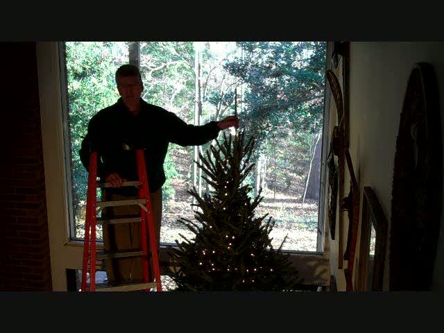 Tree Leader 2010