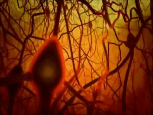 The Miracle in Human Brain – YouTube