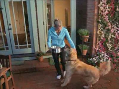 Iams: Dog People