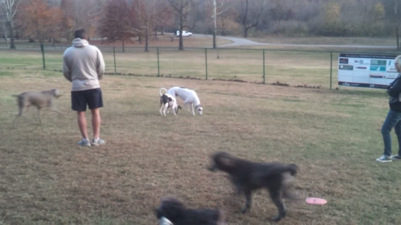 All My Rowdy Friends Are At The Dog Park Tonight!