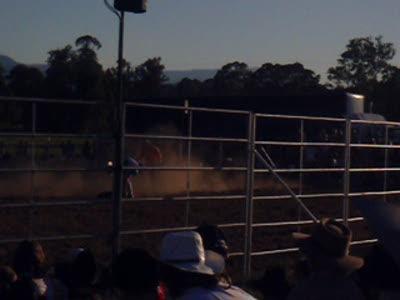 4 year old bull rider