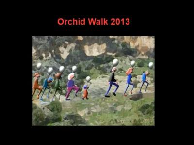 Orchid Walk 2013