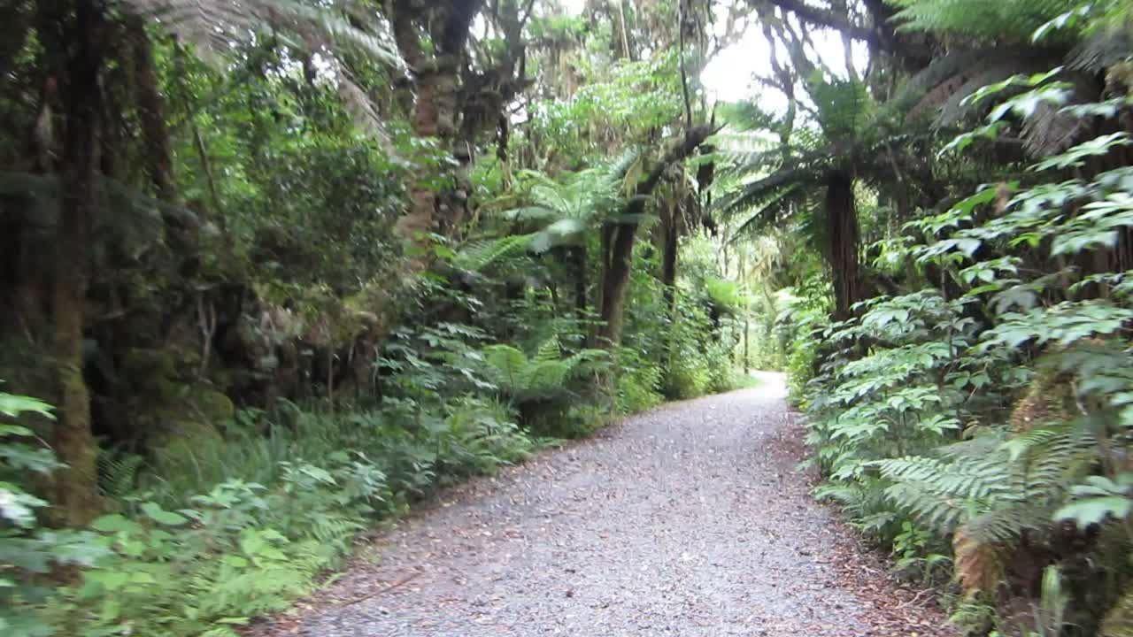 Riding the Rainforest Trail From Fox Glacier to the village