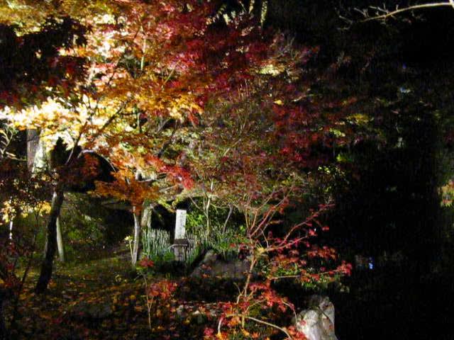 At the Eikan-do 永観堂 Light-up. Kyoto. Nov '09.