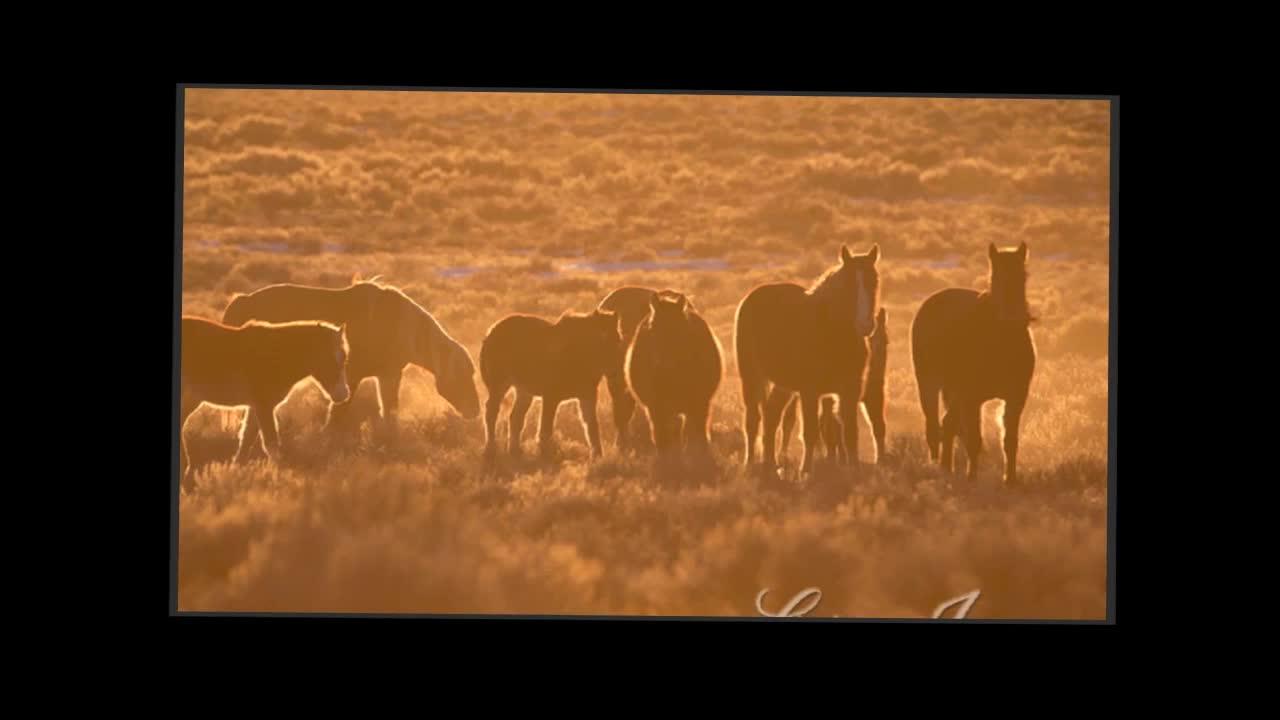Wild Horses of Adobe Town