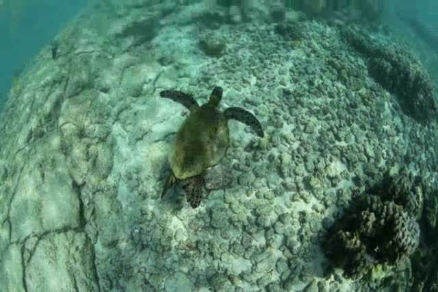 Dream of the Sea Turtle
