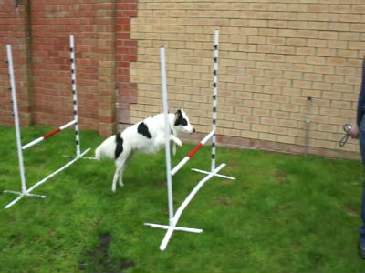 Marley Agility in the Garden