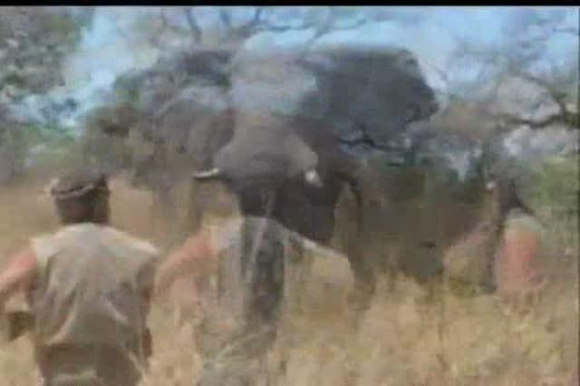 matanza_de_elefantes_rann_safari