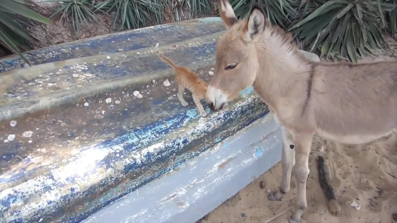 Kitten and Donkey share a little love….
