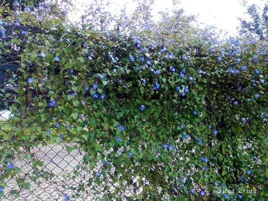 wabi sabi blue